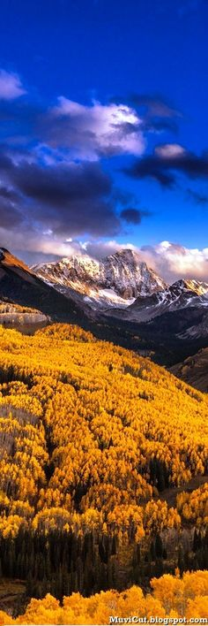 Just a little peek into what Aspen looks like in the Fall. Stunning.