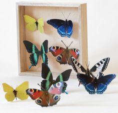 Diese Papier-Schmetterlinge wirken fast lebensecht!  Du bekommst 9 wunderschöne Schmetterlinge der folgenden Gattung: 1x Schwalbenschwanz, 2x Tagpfauenauge, 2x Zitronenfalter, 2x ein hübscher grüner, 2x ein hübscher blauer Schmetterling.  Keine Sorge, ausschneiden musst Du nicht