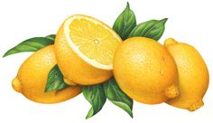 Citrus Fruit Stock Art - Douglas Schneider Illustration