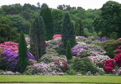 From the terraces the spectacular rhododendron garden can be viewed, giving one of Belsay's most photographed views in June. Description from english-heritage.org.uk. I searched for this on bing.com/images