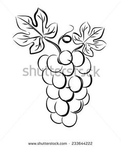 vector black illustration of grapes on white
