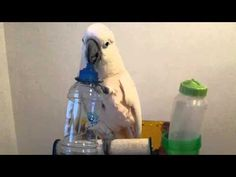 Tap The Bottle - YouTube Parrot, Tap Tap, Bottle, Funny Stuff, Youtube, Parrot Bird, Funny Things, Flask, Youtubers