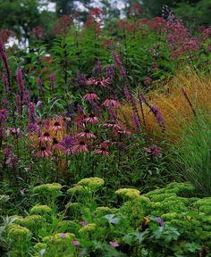 Sedums, Echinaceas, grass