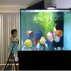 The wonders of an aquarium are endless at any age! Aquarium Aquascape, Aquarium Setup, Aquarium Design, Home Aquarium, Planted Aquarium, Aquascaping, Aquariums Super, Amazing Aquariums, Tanked Aquariums
