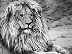 View the different ways people have colored the Lion from the Beautiful Creatures grayscale adult coloring book.