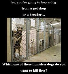 ADOPT Always...  Please do not buy from a breeder, puppy mill or any outlet that sells them.  Spay Neuter Foster Transport and if you aren't able to do these things, DONATE so others can. Stop killing our shelter animals.