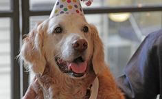Happy Birthday, Bretagne! You and all the other service dogs out there truly deserve it.  Source: BarkPost/YouTube