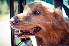 26/52 {Sophie} Convertible Doggie Bug Eyes!