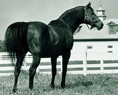 Citation: 1948 triple crown winner horse of the year thoroughbred horse racing's first millionaire.45 starts,32 wins,10 seconds, 2 thirds