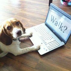 Hint...Hint #beagle