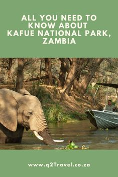 All you need to know about Kafue National Park, Zambia River Camp, West Road, Travel Companies, Bird Species, Tour Guide, Need To Know, National Parks, Southern, Africa