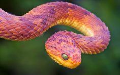 http://BlueChipMoney.com  -Bush #Viper.. #Snakes