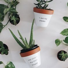 Have a look at our favorite succulent products. In this shop, you will find our ebooks, and affiliate links to succulent products. How To Water Succulents, Planting Succulents, Succulent Plants, Cactus, Aloe Vera, Types Of Herbs, Painted Pots, Hand Painted, Plants Are Friends