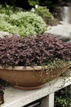 Trifolium I by Victoria Skoglund I Zetas Finsmakarens Trädgård