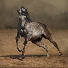 women and horse | 29 arabian horses brave and proud arabians are versatile horses that ...
