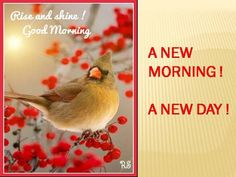 A new morning a new day rise and shine to the energy of this new day. A cute chirpy bird to wish you Morning Morning, Good Morning Good Night, Good Morning Quotes, Monday Morning, Sunday, New Month Greetings, Good Morning Greetings, Online Greeting Cards, Morning Blessings