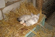 They Said I Could Be Anything…So I Became A Chicken | They Said I Could Be Anything...Cat Edition