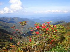 Craggy Gardens is like something out of a fairytale book. With beautiful trees twirling over the trails you'll love the hike but the view at the top is breathtaking. It offers one of the best views of the Blue Ridge Parkway in the state. Bonus: in June the rhododendron blooms add extra beauty.