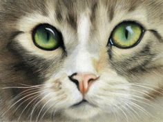 Cat Eyes Award Winning Colored Pencil Drawing by Heather Mitchell