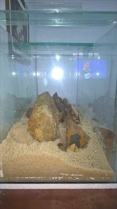 Meu futuro aquário Holandês!