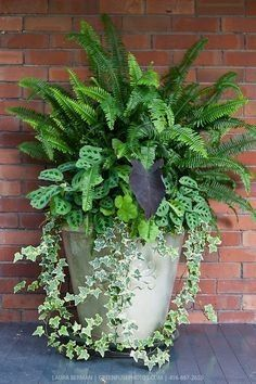 Ivy, ferns and other tropical plants in a tall white stone pot against a red brick wall. Ivy, ferns and other tropical plants in a tall white stone pot against a red brick wall. Plants, Garden Planters, Foliage Plants, Tropical Plants, Front Porch Flowers, Shade Plants, Garden Containers, Garden Landscaping, Indoor Plants