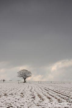 Lone tree | Bart Heirweg Landscape Photography