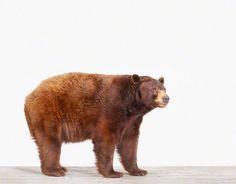 Sharon Montrose | Bear