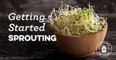 Learn the basics of sprouting seeds to enjoy the super health benefits of beans sprouts, vegetablesprouts, grains, and more!