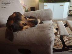 Husky, Throw Pillows, Dogs, Toss Pillows, Cushions, Pet Dogs, Decorative Pillows, Doggies, Husky Dog