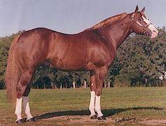 Paint Horses For Sale, Quarter Horses For Sale, American Quarter Horse, All About Horses, Horse World, Beautiful Horses, Pretty Horses, Horse Breeds, Show Horses