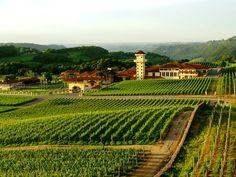 Vale dos Vinhedos, Brasile.  E' la zona vinicola più famosa del paese, fortemente influenzata dalla forte immigrazione italiana alla fine del 1800. Questa zona rappresenta il 90% della produzione di vino in Brasile. Le uve coltivate qui sono utilizzate per la produzione di Riesling, Merlot, Teroldego, e Malvasia.