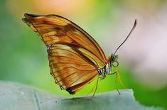 Schmetterling, Orange, Insekt, Gelb -