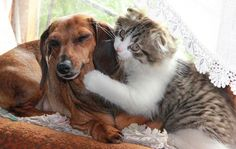 Friendship cats and dogs