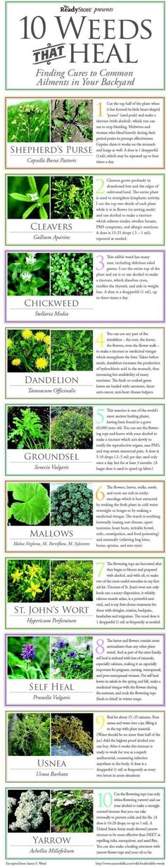 Top 10 Weeds That Heal