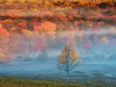 Misty Valley and Forest in Autumn, Davis, West Virginia, USA Photographic Print by Jay O'brien at AllPosters.com