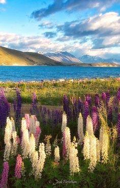 Lake Tekapo, Canterbury, New #Zealand