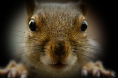 This is how the squirrel should look on a close up, hahaha (it's photoshoped)