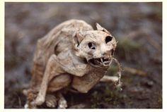 からから = dried-up, parched;