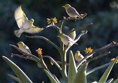 Watch the birds whilst having breakfast. Africa Travel, Wildlife, Birds, Rock, World, Pictures, Animals, Watch, Breakfast