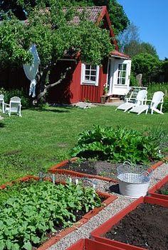 veggie garden..