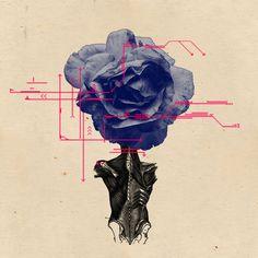 Anatomy of a Rose Art Print by Nikola Nupra, society6