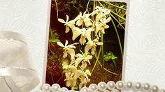 множество видов орхидей