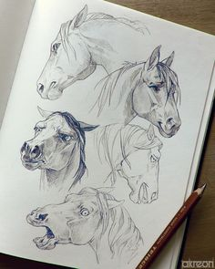 Facial expressions of the horse - Pencil Drawing - Facial expressions of the horse of gesichtsausdrucke pferdes - BodyCare drawing expressions facial Facials Fragrance horse MakeupRevolution pencil Perfume # Horse Pencil Drawing, Horse Drawings, Art Drawings Sketches, Realistic Animal Drawings, Pencil Drawings, Doodle Drawing, Painting & Drawing, Knife Painting, Drawing Drawing