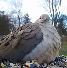 Woman Sets Up A Feeder Cam In Her Yard And The Photos Are Extraordinary (30 New Pics) Cool Pictures, Cool Photos, Funny Pictures, Bird Types, Funny Expressions, Mourning Dove, Different Birds, Funny Birds, People