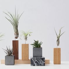 No-Fuss Greenery by EVRGREEN designed in Germany #MONOQI