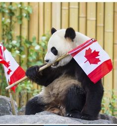 Jia Yueyue at the Toronto Zoo :)