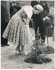 thehouseofwindsor:  HM The Queen plants a tree to commemorate her visit to Mill Hill School, in north London, on July 1, 1957.