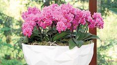Pořiďte si do bytu praktické čističky vzduchu vkvětináči