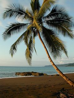 """Palm, Samara Beach, Peninsula Nicoya Costa Rica. """"Beaches on the Pacific side of Costa Rica often stretch, deserted, for miles."""" Photo by chuha, via Flickr"""