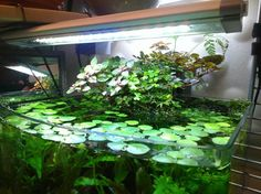 Planted HOB spillway for AquaClear HOBs